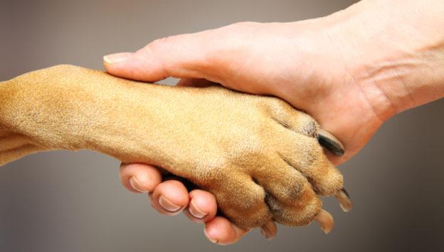 terapia-con-perros-alzheimer