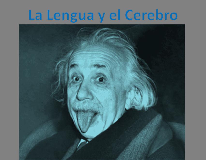 einstein-lengua-cerebro
