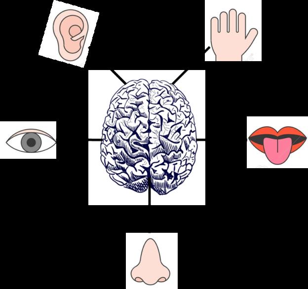 CAPACIDADES-COGNITIVAS-GNOSIAS-ALZHEIMER